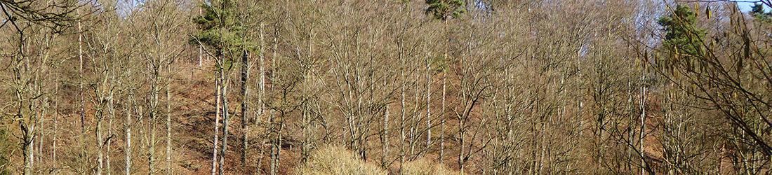 Wald- und Forstwirtschaft