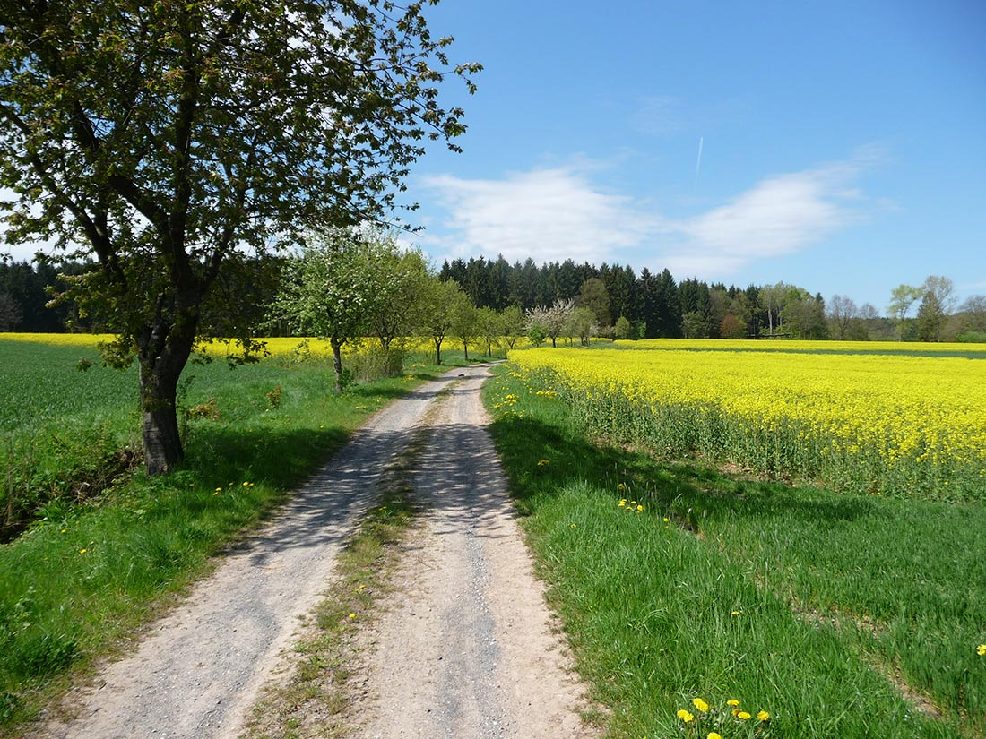 Obstbaumreihen beleben die Agrarlandschaft