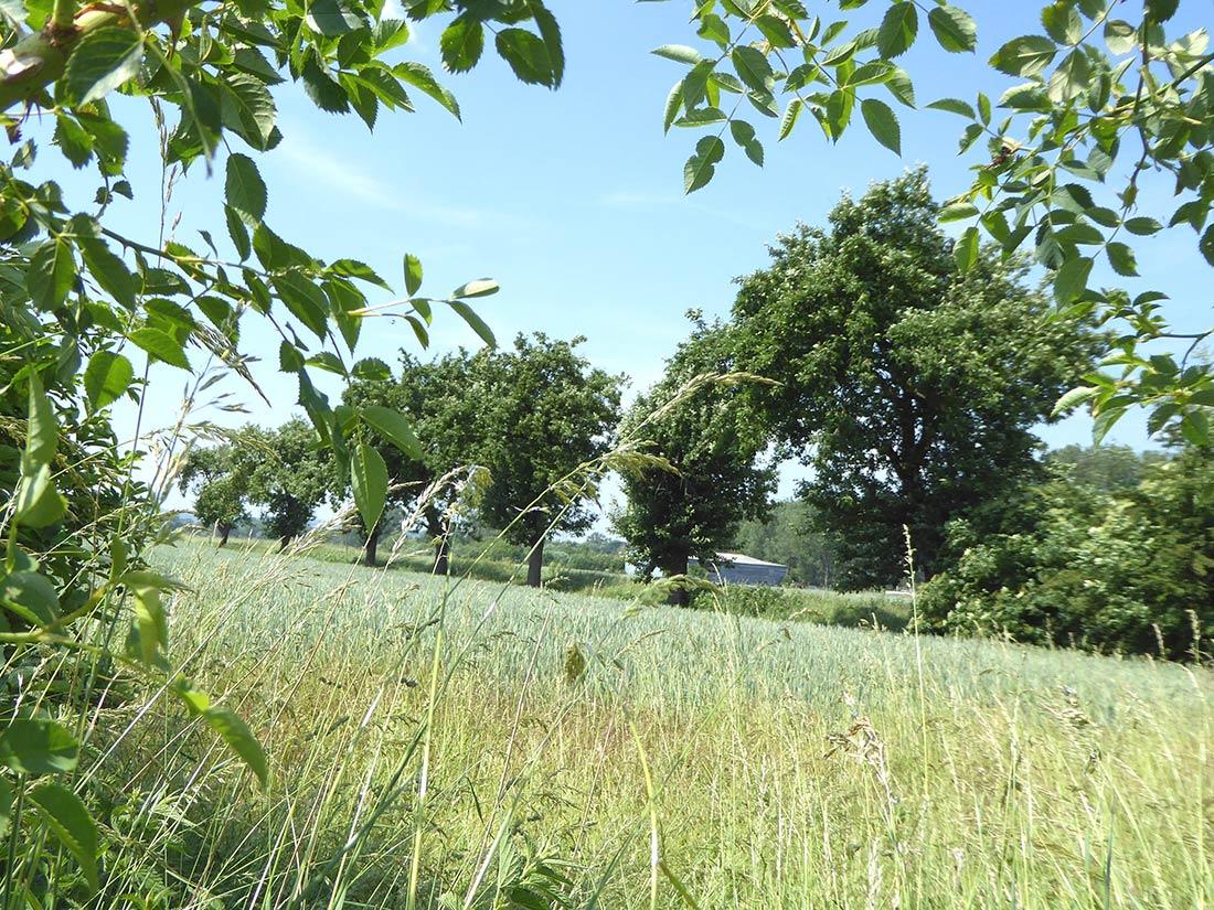 Obstbäume entlang der Wirtschaftswege