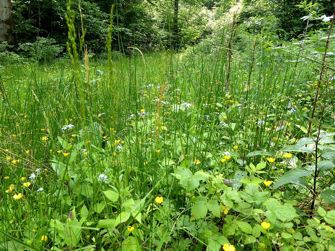 Üppiger Pflanzenbewuchs auf einer Waldlichtung