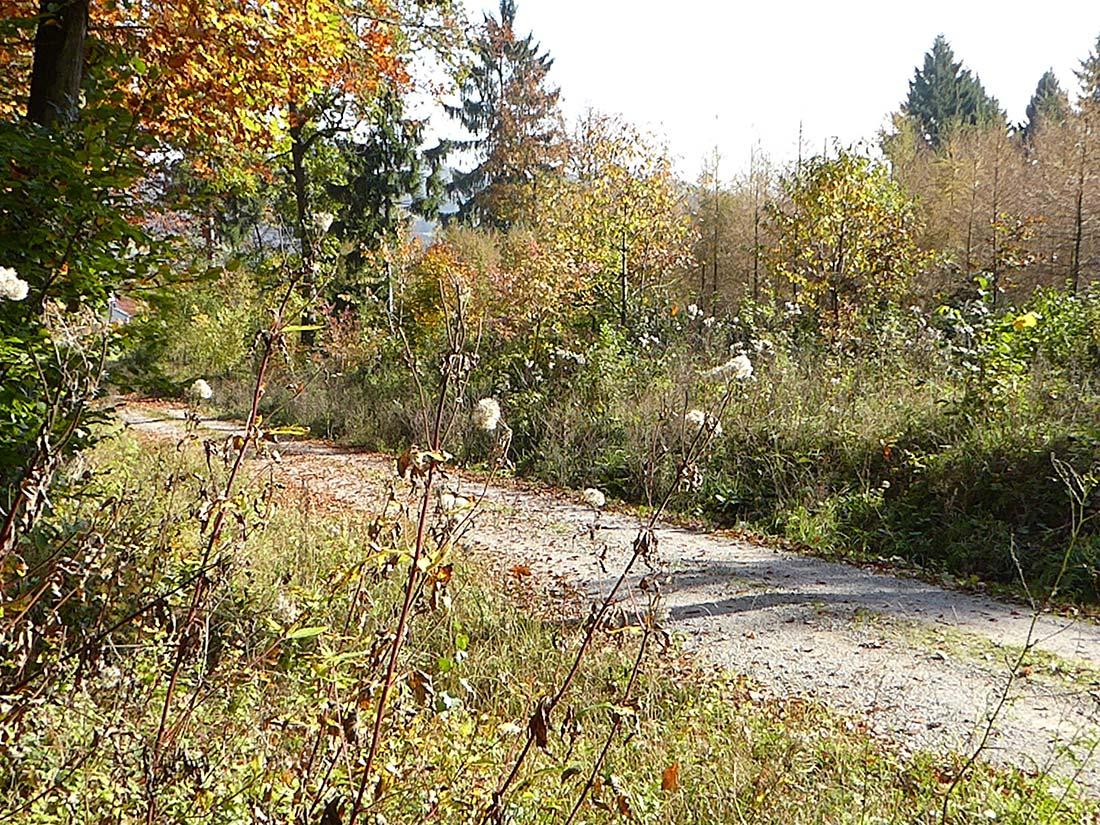 Binnenwaldrand im Herbst entlang des Waldweges