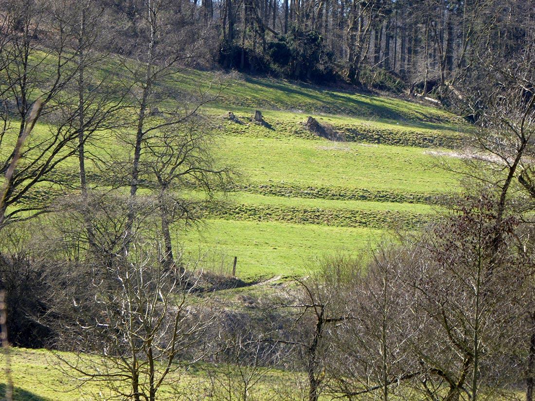 Grünfläche im Bereich der ehemaligen Siedlung